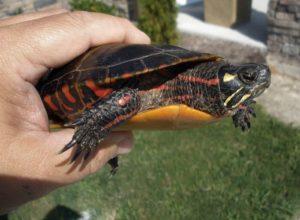300+ имен для черепах — красивые клички для мальчиков и девочек.