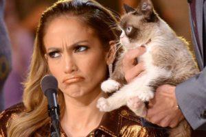 Клички кошек и котов звезд и знаменитостей