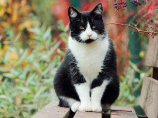 350+ красивых кличек для черно-белых кошек