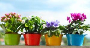 410+ красивых имен для цветков