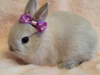 420+ красивых имен для декоративных кроликов