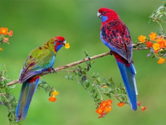 550+ красивых имен для попугаев мальчиков