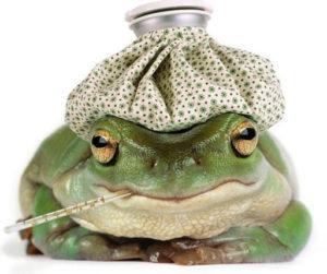 360+ красивых имен для лягушек