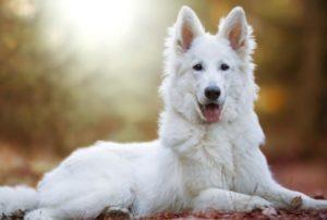9 обаятельных канадских пород собак