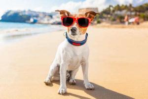 550+ самых крутых кличек для собак