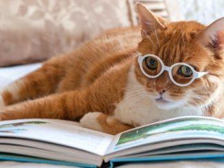 390+ современных и стильных кличек для кошек