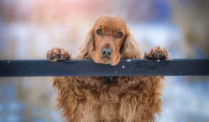 ТОП-20 пород собак для квартиры без запаха