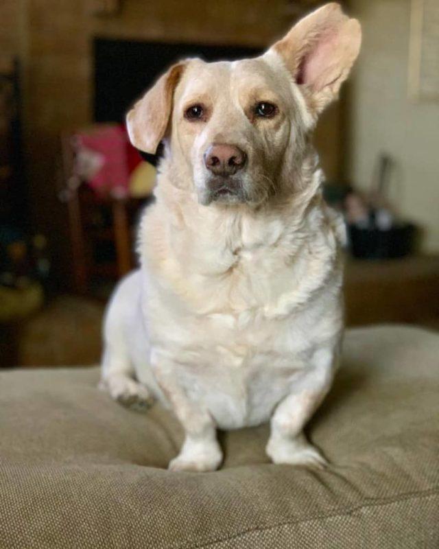 ТОП-20 красивых, умных и ярких метисов собак