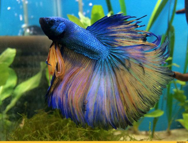 350+ имен для синих рыбок